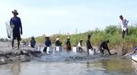 Nuôi xen canh trên ruộng lúa, nông dân Kiên Giang trúng đậm vụ mùa tôm càng xanh