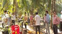 Sâu đầu đen hại dừa: Bến Tre tức tốc vào cuộc phòng trừ