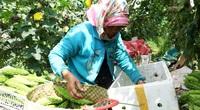 """Quảng Nam: Sau Tết, rau củ rớt giá thê thảm, nhiều nông dân phải """"nài nỉ"""" thương lái lấy hàng"""