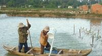 Bình Định: Nông dân chuẩn bị vụ tôm mới, vì sao tỉnh này cảnh báo nhiều bất trắc?