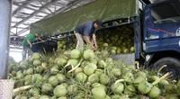 Bến Tre: Tin vui đầu năm, đơn hàng nhiều, doanh nghiệp đã hối hả xuất khẩu dừa uống nước, ống hút dừa