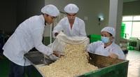 Vì sao loại hạt có nhiều ở Bình Phước được Mỹ nhập khẩu rất nhiều, chiếm đến 89,3% thị phần?