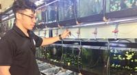 Cầm bằng Đại học Luật kinh tế về quê nuôi thứ cá này, trai phố 9X tỉnh Đắk Lắk lại phát tài