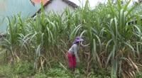 Bình Định: Tinh thần tự lực vươn lên, nhiều hộ dân xin ra khỏi hộ nghèo ở huyện Hoàn Ân