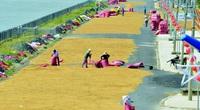 Anh, Hàn Quốc, EU tăng mua, rộng cửa xuất khẩu gạo chất lượng cao
