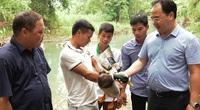 Yên Bái: Trồng dược liệu, nuôi vịt cổ xanh , nông dân nhanh khấm khá