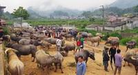 4 phiên chợ lạ lùng ở Việt Nam nổi danh từ cái tên đến mặt hàng bán bởi chỉ buôn bán trâu và bò