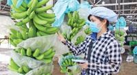 Loại quả nơi nào ở Việt Nam cũng trồng đắt hàng ở châu Âu, giá lên tới 3.192,9 Eur/tấn