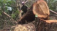 Đắk Lắk: Điều tra vụ thiếu trách nhiệm để mất hơn 22 nghìn ha rừng