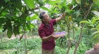 """Vĩnh Phúc: Trồng thứ cây ra hoa bán đắt như vàng, một nông dân Tam Đảo ví như """"cất của hiếm"""" trong vườn"""