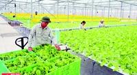 Nông dân chuyên nghiệp mới có nền nông nghiệp chuyên nghiệp