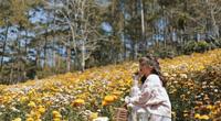 Đà Lạt: Rực rỡ sắc màu đồi hoa cúc bất tử hút du khách check-in