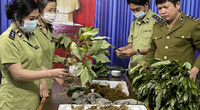 Bắt giữ nhiều loại củ từ các tỉnh phía Bắc đưa vào Kon Tum giả sâm Ngọc Linh
