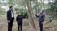 """Phú Thọ: Vùng đất nông dân toàn chôn """"kho báu"""" ngoài vườn, hễ ra ngõ là gặp tỷ phú"""