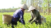 Supe Lâm Thao cung ứng 4.756 tấn phân bón trả chậm