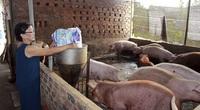Giá heo hơi duy trì mức cao, nông dân lãi 1-1,5 triệu đồng/con, vì sao vẫn không vui nổi?