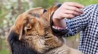 Phải xử lý nghiêm chủ nếu chó tấn công người