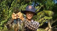 Đắk Lắk: Đã nuôi tôm càng xanh thành công, hơn nữa còn nuôi được toàn con to tướng, bán 400.000 đồng/kg