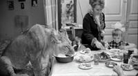 Câu chuyện vừa cảm động vừa đáng sợ về gia đình duy nhất trên thế giới nuôi sư tử như thú cưng trong nhà