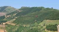 Cao Bằng: Đáng ngại, dân trồng nhiều cây gỗ quý thế mà bán không ai mua, có nguy cơ làm củi đốt