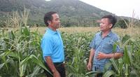 Ông nông dân tỉnh Bình Định trồng cây gì, nuôi con gì mà được Thủ tướng tặng bằng khen?
