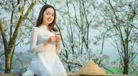 Điện Biên: Rực rỡ sắc hoa ban nở trắng núi rừng