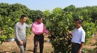 Quảng Ninh: Gần 200 mô hình nông nghiệp  công nghệ cao
