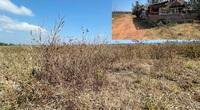 """Quảng Ngãi: Bỏ hoang diện tích """"khủng"""" nhưng nhiều dự án nông nghiệp tiếp tục trình cấp phép?"""