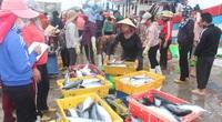 Nghệ An: 1 tàu vây ra khơi 2 đêm, trúng mẻ cá gì mà bán được gần 400 triệu đồng?