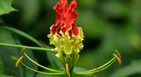 Kinh ngạc những bông hoa đắt tiền nhất thế giới tặng chị em ngày 8/3, có bông giá 5 tỷ đồng