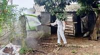 NÓNG: Bệnh viêm da nổi cục đã lan vào tới tỉnh Quảng Bình, 100 con trâu bò dính bệnh