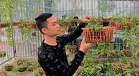 """Hà Tĩnh: 9X """"treo"""" bằng đại học về quê trồng loại hoa rừng, lãi hàng trăm triệu mỗi năm"""