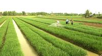 Người hưởng lương thường xuyên không được mua đất nông nghiệp?