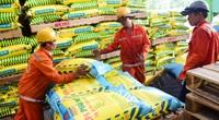 """""""Chóng mặt"""" vì giá phân bón tăng, nông dân phải bán gấp lúa để trữ phân bón"""