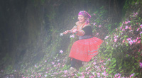 Du lịch Cao Bằng: Hoa Đỗ quyên ẩn hiện trong sương mù, đẹp đến ngỡ ngàng