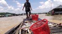 Cảnh báo: Mưa lớn đầu mùa, nguy cơ cá chết hàng loạt trên sông La Ngà, sông Sài Gòn