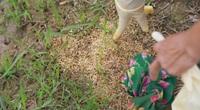 Chi trăm triệu đồng diệt chuột, lúa vẫn bị phá ở Hà Nam: Cơ quan chức năng vào cuộc làm rõ