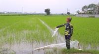 Hà Nam: Chi hàng trăm triệu đồng nhờ công ty diệt chuột, đồng ruộng của nông dân vẫn bị phá