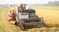 """Cổ phiếu ngành gạo kỳ vọng """"bứt phá"""" với những ưu đãi thuế quan từ các FTA"""