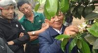 Quảng Bình: Biến vườn tạp thành vườn cây ăn quả, nông dân học hỏi lẫn nhau