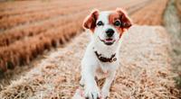 Câu hỏi khiến rất nhiều người đau đầu: Chó thuận chân phải hay chân trái?