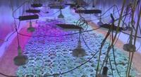 VIDEO: Cận cảnh vườn cần sa trong thành phố được đầu tư đèn chiếu tia cực tím