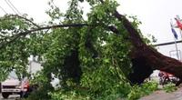 TP.HCM: Cây xanh gãy, bật gốc hàng loạt sau mưa lớn