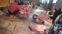 """Hà Nội: Lò mổ gia súc không phép """"tra tấn"""" người dân quận Hoàng Mai"""