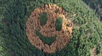 Hình ảnh mặt cười đáng yêu giữa đại ngàn rừng xanh tại Mỹ