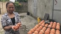 """""""Nữ tướng"""" chỉ huy trại 35.000 con gà thu lãi đều tay nhờ nuôi gà sinh học"""