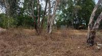 """Bà Rịa - Vũng Tàu: Bé gái 5 tuổi chết """"loã thể"""" ở bãi đất trống, nghi bị xâm hại tình dục"""