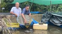 """Hậu Giang: Nuôi loài cá ví như """"nhân sâm nước"""", đến tuổi sinh đẻ rõ lắm, ông nông dân này bán khắp ĐBSCL"""