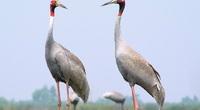 Đồng Tháp: Loài chim gì quý hiếm lâu lắm lại mới quay về Vườn Quốc gia Tràm Chim, lại mới xuất hiện có 3 con?