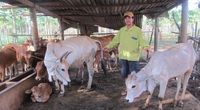 Bà Rịa-Vũng Tàu: Nuôi lợn rừng, bò lai là 2 cách làm giàu ở vùng đất này